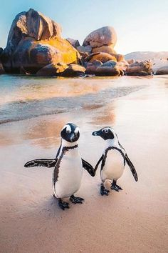 Cute Wild Animals, Cute Little Animals, Happy Animals, Animals And Pets, Pinguin Drawing, Pinguin Tattoo, Cute Animal Photos, Animal Pictures, Best Honeymoon Spots