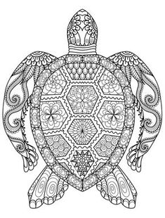 40 Best Turtle Coloring Pages Images Coloring Pages Turtle