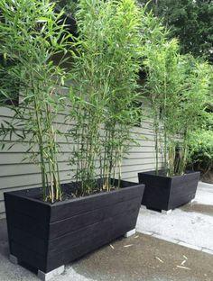 Bamboo Planter, Wood Planter Box, Wooden Planters, Diy Planters, Cedar Planters, Potted Bamboo, Bamboo In Pots, Bamboo Garden Ideas, Diy Garden