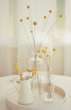billy buttons/craspedia/billy balls/woollyheads in white pitchers Feng Shui, Billy Balls, Yellow Fever, Deco Floral, Home And Deco, Mellow Yellow, Color Yellow, Mustard Yellow Decor, Yellow Shades