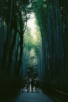Bamboo Forest / Kyoto - Japan