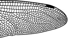 insect-wing-structure.jpg (1000×563)