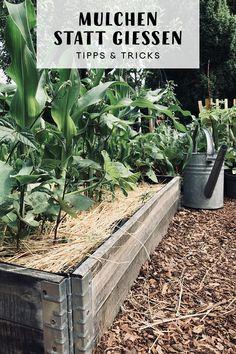 Richtig mulchen statt gießen Properly mulching instead of pouring. My vegetable beds and perennial b Organic Gardening, Gardening Tips, Urban Gardening, Hydroponic Plants, Aquaponics System, Back Gardens, Water Garden, Garden Planning, Compost