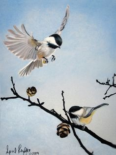 Pastel Drawing Chickadees Bird Fine Art Print - 8 x 10. By April Rafko.