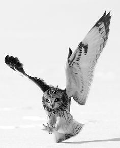 Jump, and you will find out how to unfold your wings as you fall. Ray Bradbury