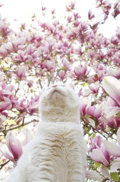 木蓮                                                       …                                                                                                                                                                                 もっと見る