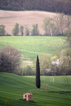 Le cyprès by Boccalupo, Siena Tuscany