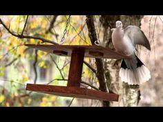 Téli madáretető Bird Feeders, Marvel, Outdoor Decor, Home Decor, Decoration Home, Room Decor, Home Interior Design, Home Decoration, Teacup Bird Feeders