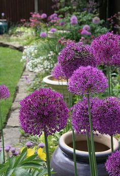 Allium's will add height and calm drama with it's pom pom style flower heads.A versatile plant for cottage beds to the modern steel container. Plant them near the front boarder so there slender necks are shown off. Modern Front Yard, Front Yard Design, Purple Flowers, Beautiful Flowers, Beautiful Gorgeous, Plantation, Dream Garden, Garden Bed, Garden Inspiration