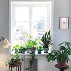 """419 gilla-markeringar, 13 kommentarer - @malinbrostad på Instagram: """"Växterna har åkt in och ut pga av det kalla vädret, men idag åker de ut för att stanna. """""""