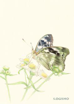 雌黒豹紋 Pictures Of Insects, Color Pencil Art, Pictures To Draw, Colored Pencils, Watercolor, Illustration, Animals, Painting, Animales