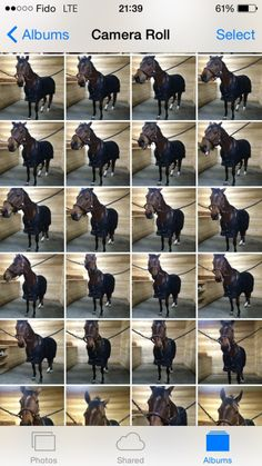 An equestrians camera roll... Omg this is is one of my my favorite pins ever!!!!