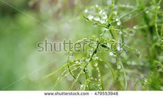 wonderful macro photography with plant full of rain drops in garden
