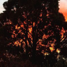 Last night's fiery sunset by Dusk, Just Go, Madness, Universe, Trees, Celestial, Sunset, Night, Nature
