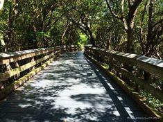 Clam Pass Beach Park Naples, FL