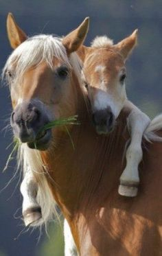 Wild Horses. Makes me heart melt. Such amazing animals. Bless them! So sweet.