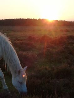 New Forest.