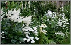Some great plants for a Moongarden. Anything that blooms white or has white foliage works great.