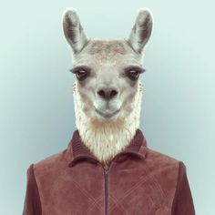 Les animaux relookés par Yago Partal Photo