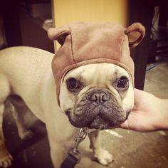 french bulldog wearing a hat