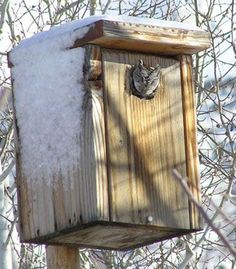 How to build an owl box for screech owls using an 8 foot long 2x12