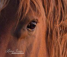 Wild Stallion's Eye Fine Art Wild Horse by WildHoofbeats on Etsy