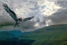hippogriff harry potter - Google Search