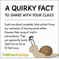 A quirky fact about snails to share with your class - from Treetop Displays. Visit our TpT store for printable resources by clicking on the provided links. Designed by teachers for Pre-Kindergarten to 7th Grade.