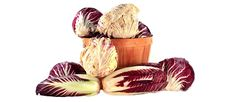 Radicchio (Cichorium intybus) is a perennial plant in the chicory genus that falls within the Asteraceae/Compositae (aster) family that includes the daisy and dandelion, amongst other composite flowers. This cultivated version of chicory, sometimes called red or Italian chicory, is a beautiful burgundy color leafed vegetable with white veins. Hailing from Italy, radicchio comes in several varieties that are usually named for the area of Italy they originated from. Benefits …