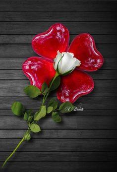 50Pcs azul del coraz/ón del lirio Semillas Semillas Planta de tiesto de Bonsai flor del lirio para jard/ín Semillas de la flor del lirio