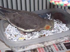 Paper Bird Foraging Activity - PetDIYs.com