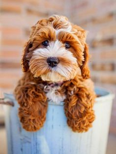 5 Mind Blowing Facts About Dogs