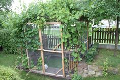 garden enclosure for rabbits