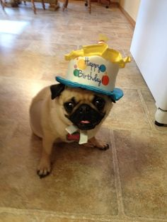 Birthday hat Cute Dog Photos, Pug Pictures, Funny Animal Pictures, Animals And Pets, Baby Animals, Funny Animals, Cute Animals, Pug Love, I Love Dogs