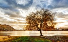 The Third Tree from #treyratcliff at www.StuckInCustoms.com - all images Creative Commons Noncommercial.