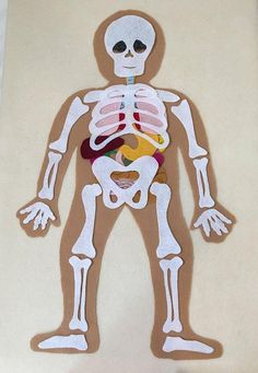 My Body Skeleton Educational Felt Set Learn Anatomy Bones