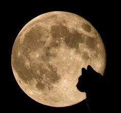 The Fascinating Harvest Moon by Kartik J, via Flickr