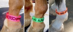 EquestriSafe – Clever and Easy to Use Equine Identification & Safety Products