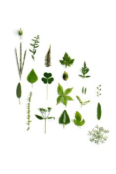 september bits of green (mary jo hoffman):
