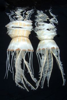 OMG, what a great jellyfish pic!