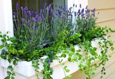 The Best Perennials to Plant in Window Boxes