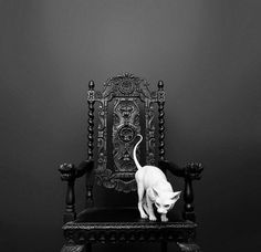 #sphynx #cat #decor #blackandwhite