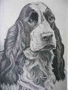 SPRINGER SPANIEL dog print Vintage 1935 N S Langley bookplate Unique collectors gift birthday anniversary dog lover present Thank you gift by Hollysprints on Etsy