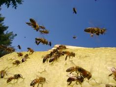 bees flying in blue sky Free Photo