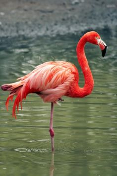 63 Best Pink Flamingos Images On Pinterest Pink Flamingos