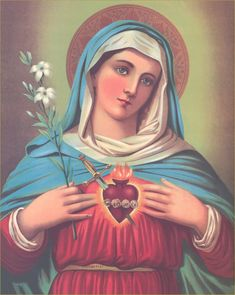 8th December: Solemnity of the Immaculate Conception of the Blessed Virgin Mary.  8 december: Saliga Jungfru Marie obefläckade avelses högtid.