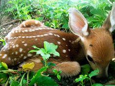 i need this!!!!!!!! little deer :) baby spots n stuff. cute cute cute
