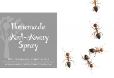 This natural, chemical-free ant spray is easy to make and will keep the pests away!  http://wellness-media.com #DIY #essentialoils #bugspray #natural