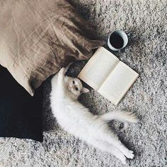Meow cat coffee and book