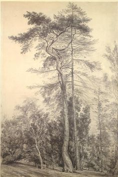 Tree Study, John Constable-subject matter for bascilica mural